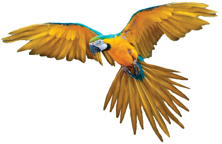 Parrot1