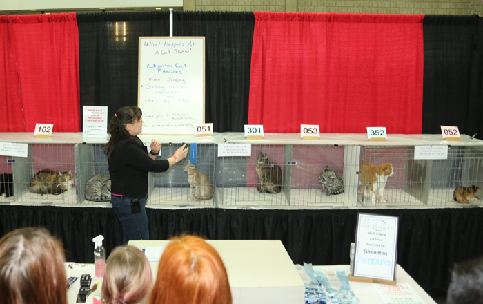Edmonton Cat Fanciers Club