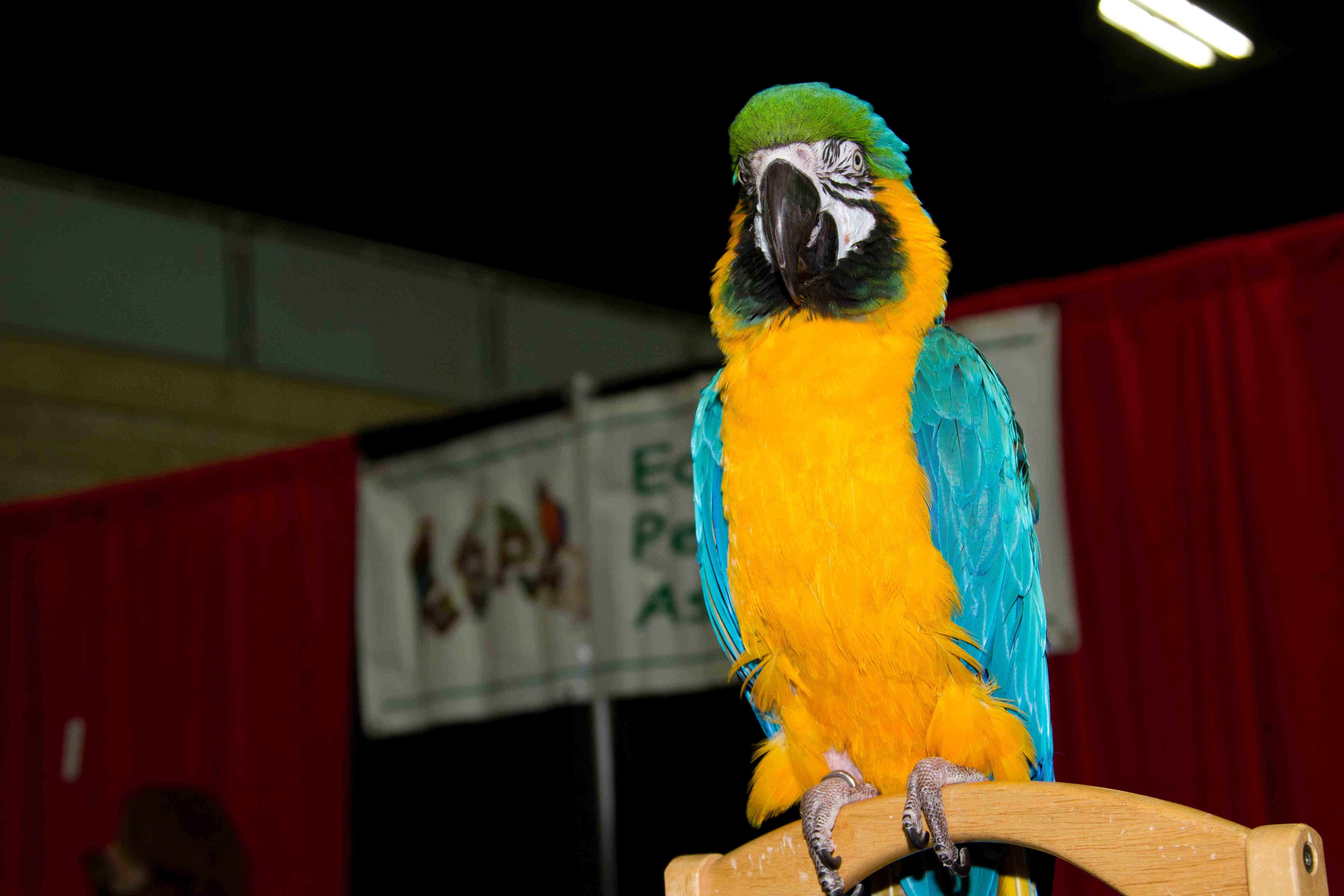 Pet Parrot Association